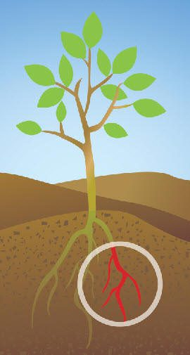 Root Cause Analysis helps you get to the source of the problem.